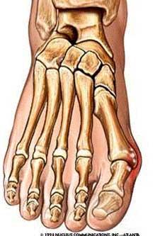 foot bone illustration